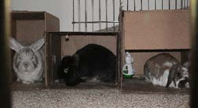 Amber, Peter and Dottie in their adjacent cardboard boxes