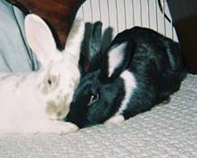 Clarence and Abigail sit cheek to cheek