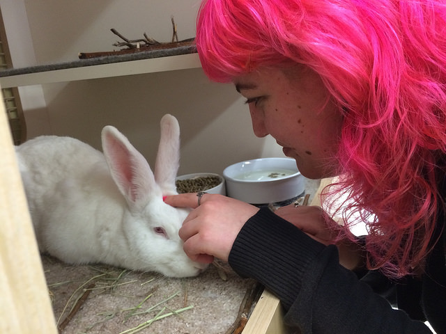 another happy rabbit story