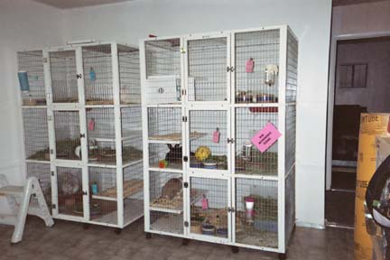 Cages where our bunnies recover from neutering/spaying and learn litterbox habits